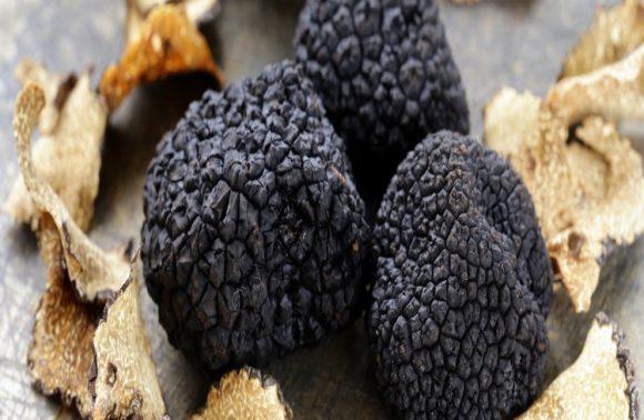 GOURMET EXPERIENCE: Truffes&vins de Châteauneuf-Du-Pape